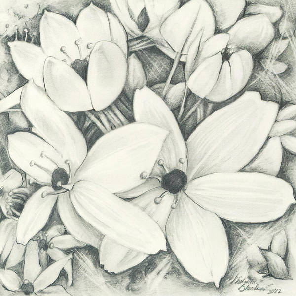 Flowers Pencil Poster