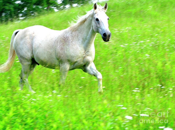 Horse In Pasture Field Poster