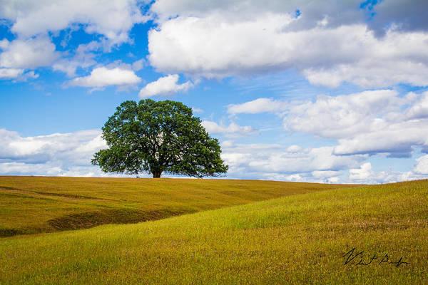 Lone Oak Poster