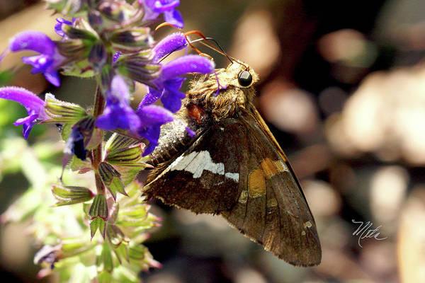 Moth Snack Poster