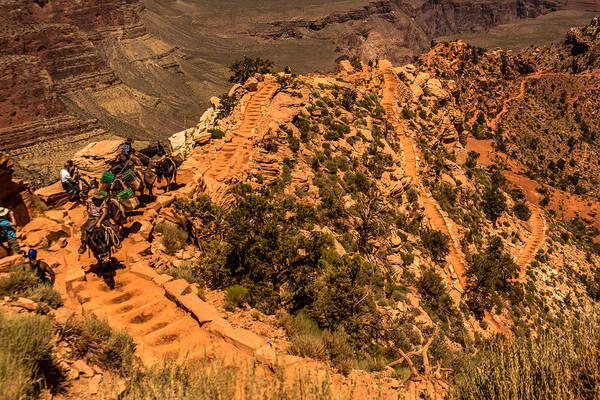 Mule Train In Grand Canyon Poster