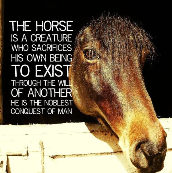 Noble Morgan Stallion Quote Poster