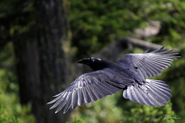Raven Flight Poster