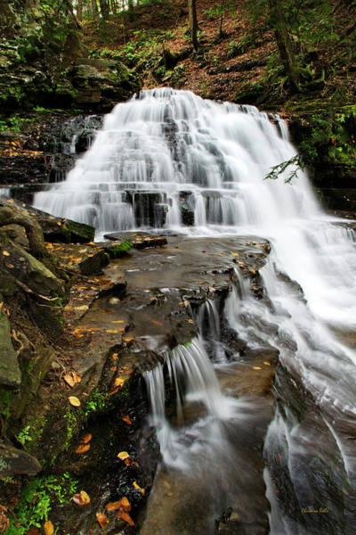 Salt Springs Waterfall Poster