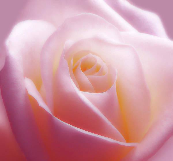 Soft Nostalgic Rose Poster