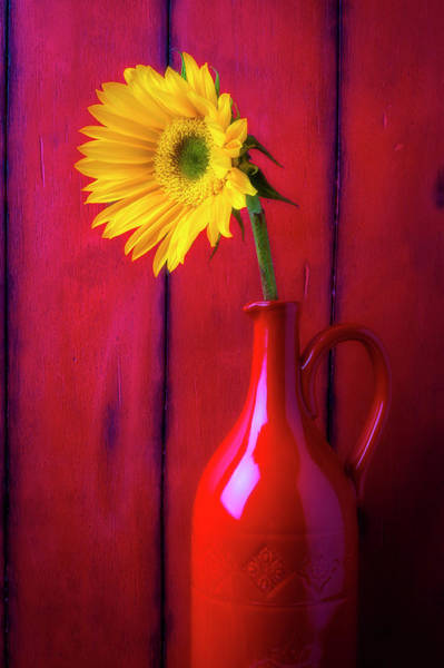 Sunflower In Red Pitcher Poster