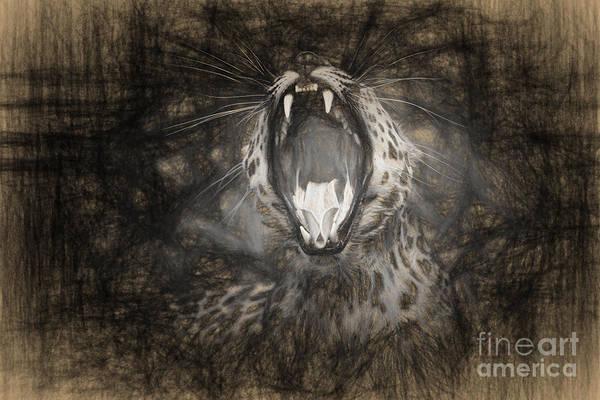 The Leopard's Tongue Rolling Roar IIi Poster