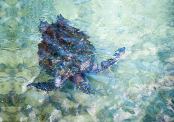 Watercolor Turtle Poster