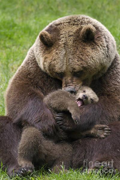 Mother Bear Cuddling Cub Poster