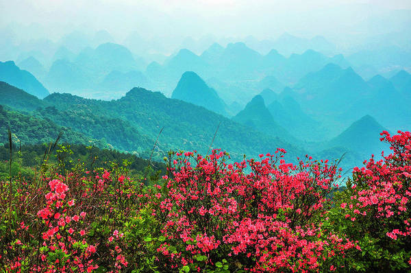 Blossoming Azalea And Mountain Scenery Poster