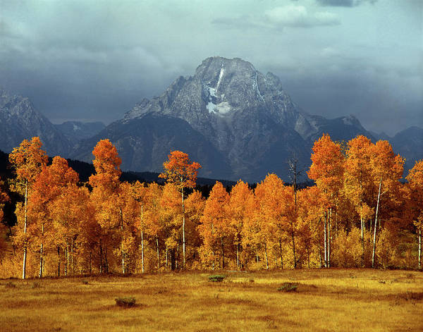 1m9235 Mt. Moran In Autumn Poster
