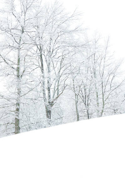 Frosted Trees And Pasture Field Poster