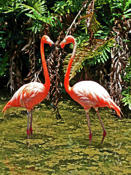 2 Pink Flamingos Poster
