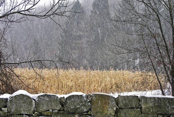 Snow On Corn Field Poster