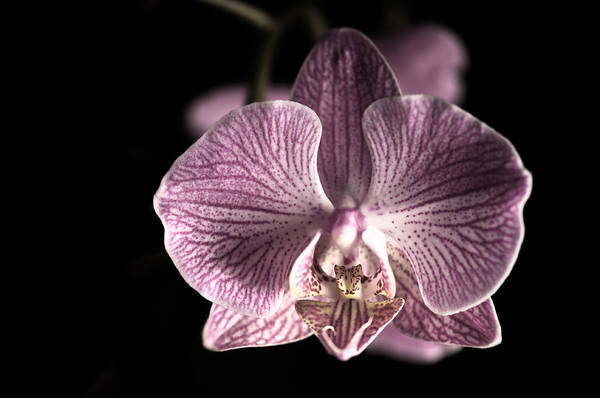 Close Up Shoot Of A Beautiful Orchid Blossom Poster