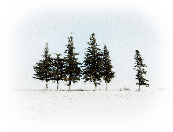 6 Trees Poster