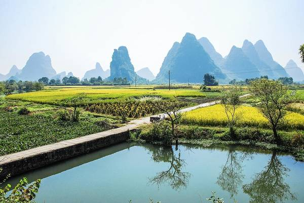 Rice Fields Scenery In Autumn Poster