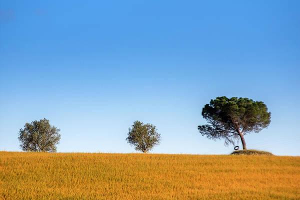 Val D'orcia Landscape Poster