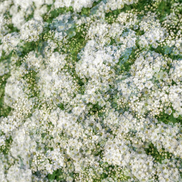 Spring Season - Inspired By Jackson Pollock Poster