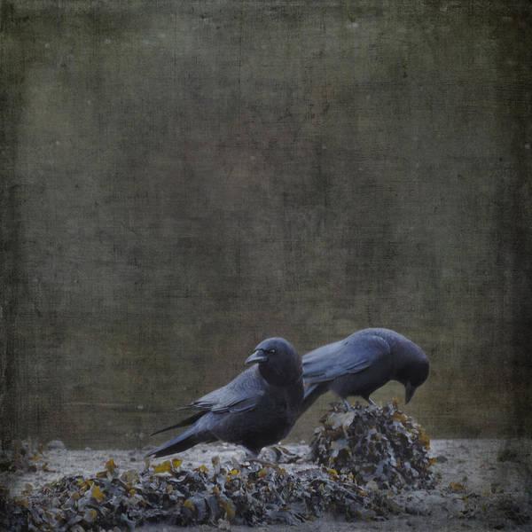Blackbirds At The Beach Poster