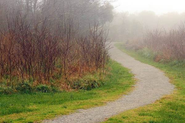 A Foggy Path Poster