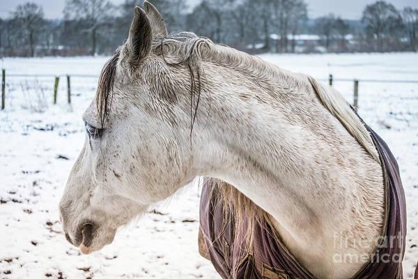 A Girlfriend Of The Horse Amigo Poster