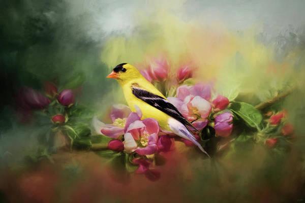 A Splash Of Joy Bird Art Poster