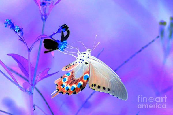 A Strange Butterfly Dream Poster