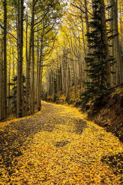 A Stroll Among The Golden Aspens  Poster
