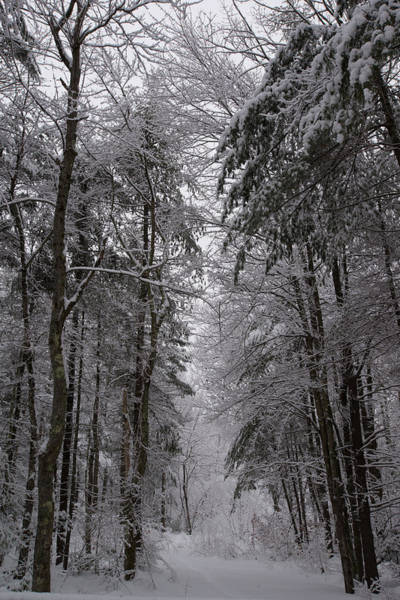 A Winters Path Poster