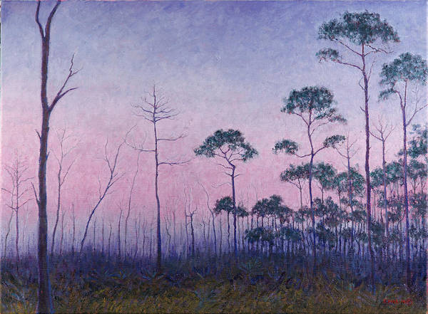 Abaco Pines At Dusk Poster
