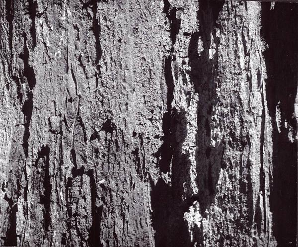 Abstract Treebark Poster