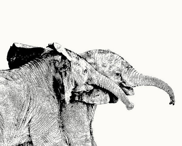 Affectionate Young Elephant Pair Poster