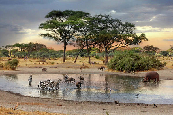 African Safari Wildlife At The Waterhole Poster