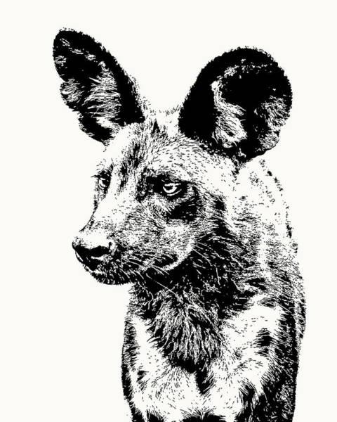 African Wild Dog On Alert Poster