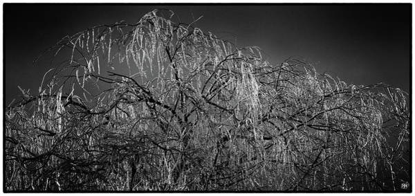 After The Ice Storm Poster