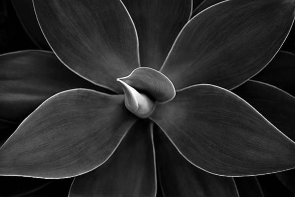 Agave Leaves Detail Poster