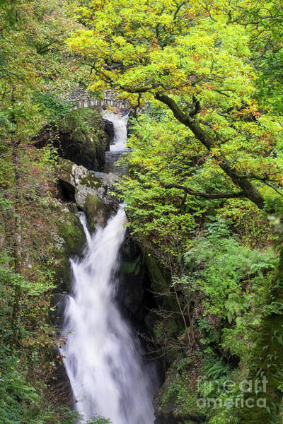 Aira Force #1 Poster