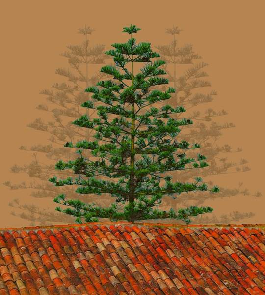 Alentejo Fir And Roof Tiles Poster