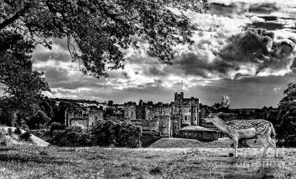 Alnwick Castle And Fallow Deer Poster
