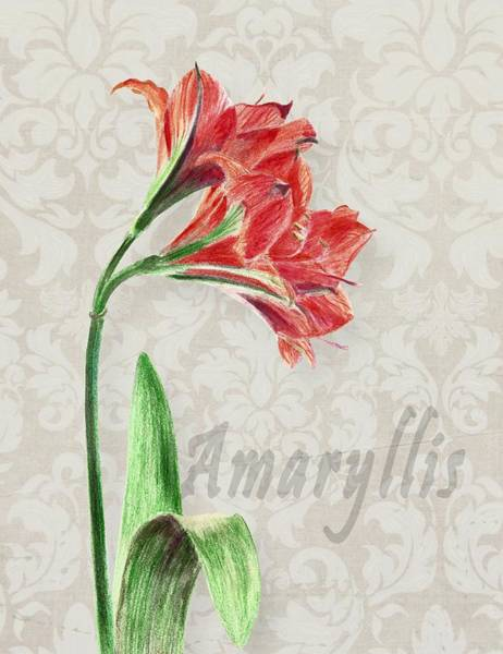 Amaryllis On The Ornament Poster