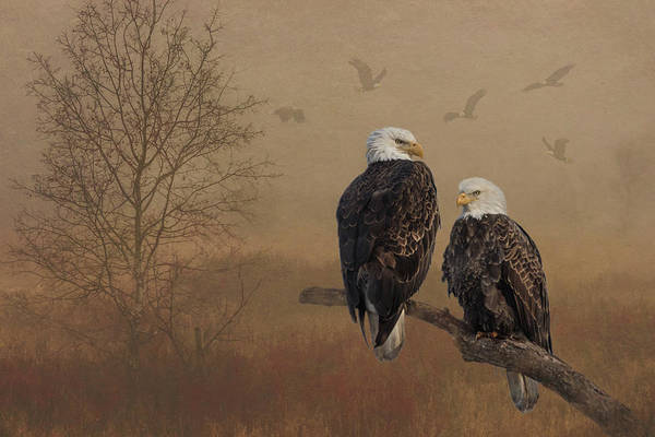 American Bald Eagle Family Poster