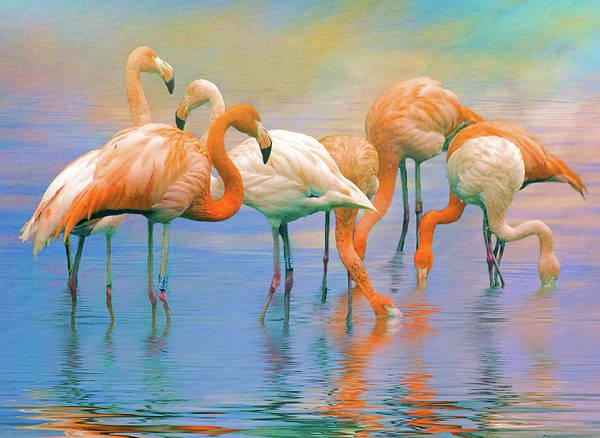 American Flamingos Poster