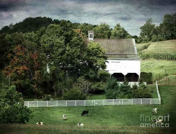Amish Farm In The Fall With Textures Poster