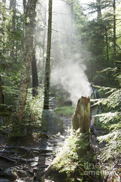 Ammonoosuc Ravine Trail - White Mountains New Hampshire Usa Poster