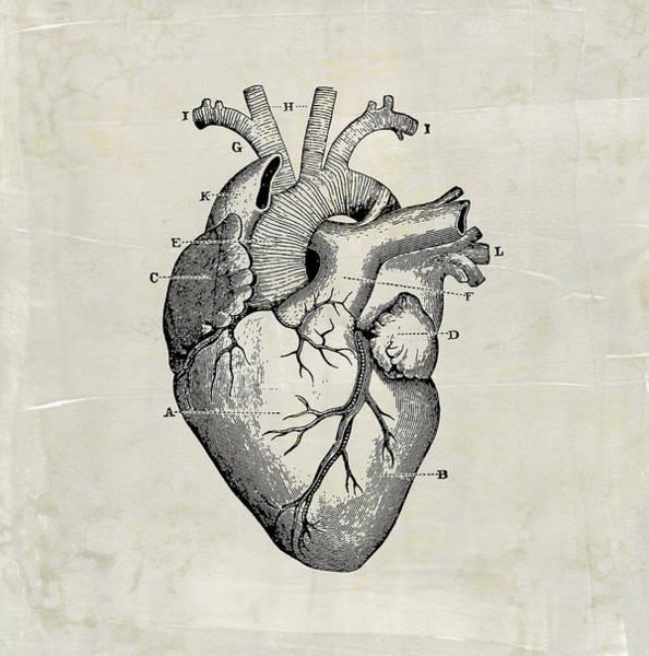 Anatomical Heart Medical Art Poster