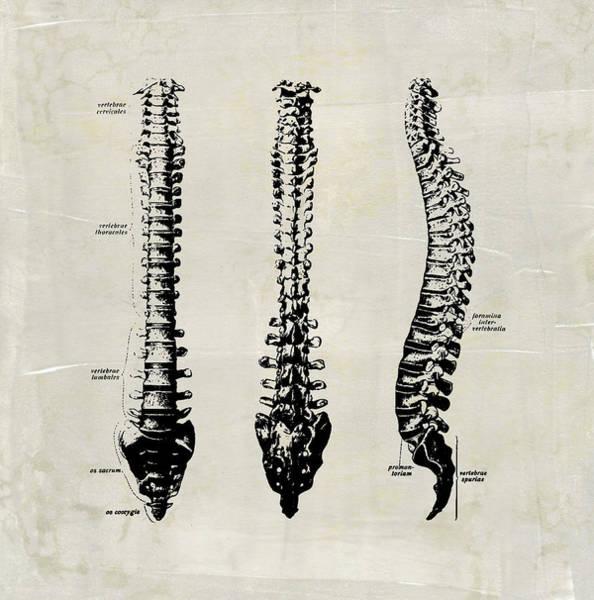 Anatomical Spine Medical Art Poster