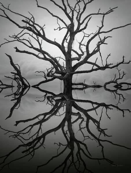 Ancient Oak Tree Montage Poster