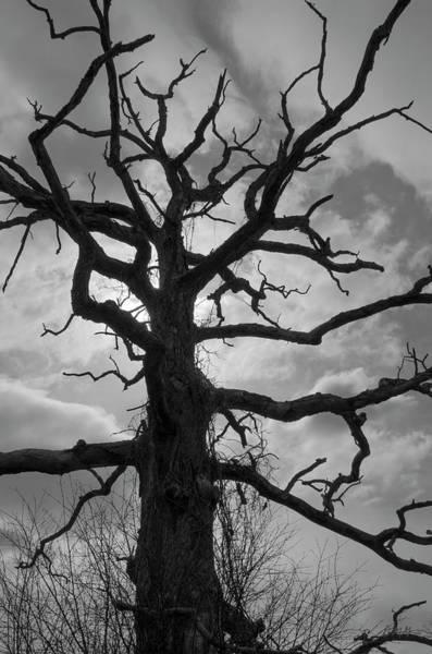 Ancient Oak Tree No. 4 Poster