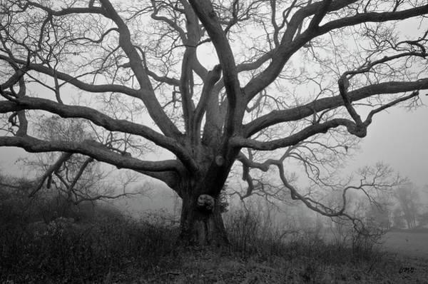 Ancient Oak Tree V - Sheep Pasture Poster